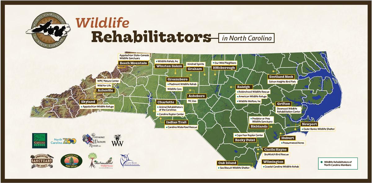 wildlife rehabilitators of nc